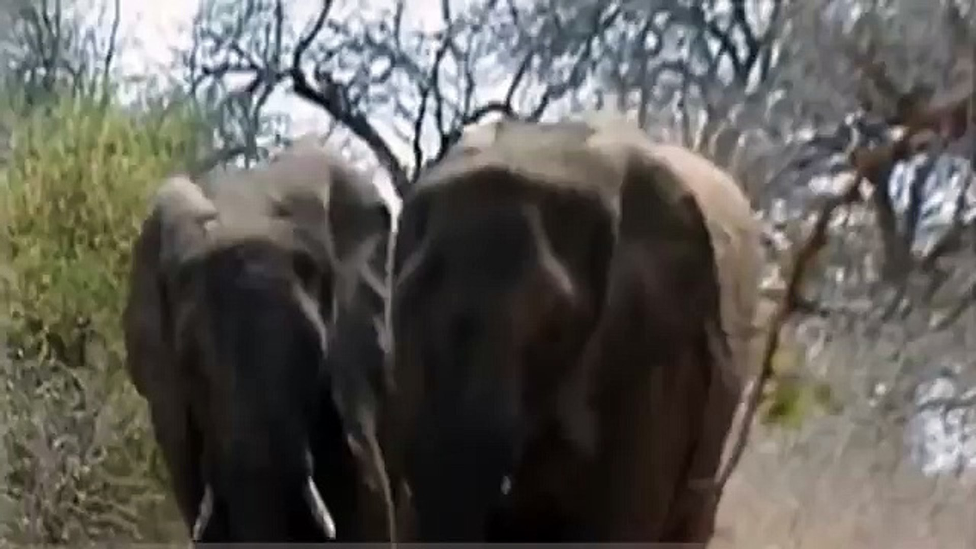 Animal Video ELEPHANT MATING WITH RHINO? WHY?!? {Full Animal Planet Documentary}