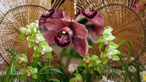 Цветок Орхидеи Цветы Орхидеи