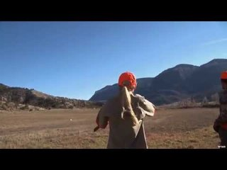 Hunting Pheasant with Dogs in Colorado