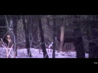 Hunting World Record Deer With Trigger Effect