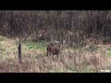 How to Attract Deers in the Woods