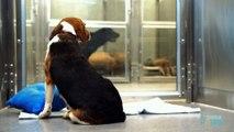 Cette fillette se rend au refuge pour animaux et voit ce qu'aucun adulte n'arrive à voir!
