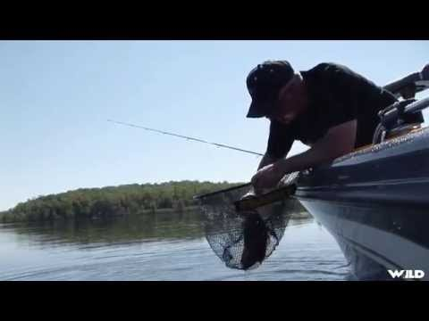 Fishing for Smallmouth Bass with Leeches