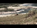 Hunting Grizzly Bear in BC