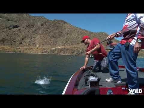 Largemouth Bass Fishing on Lake Isabella