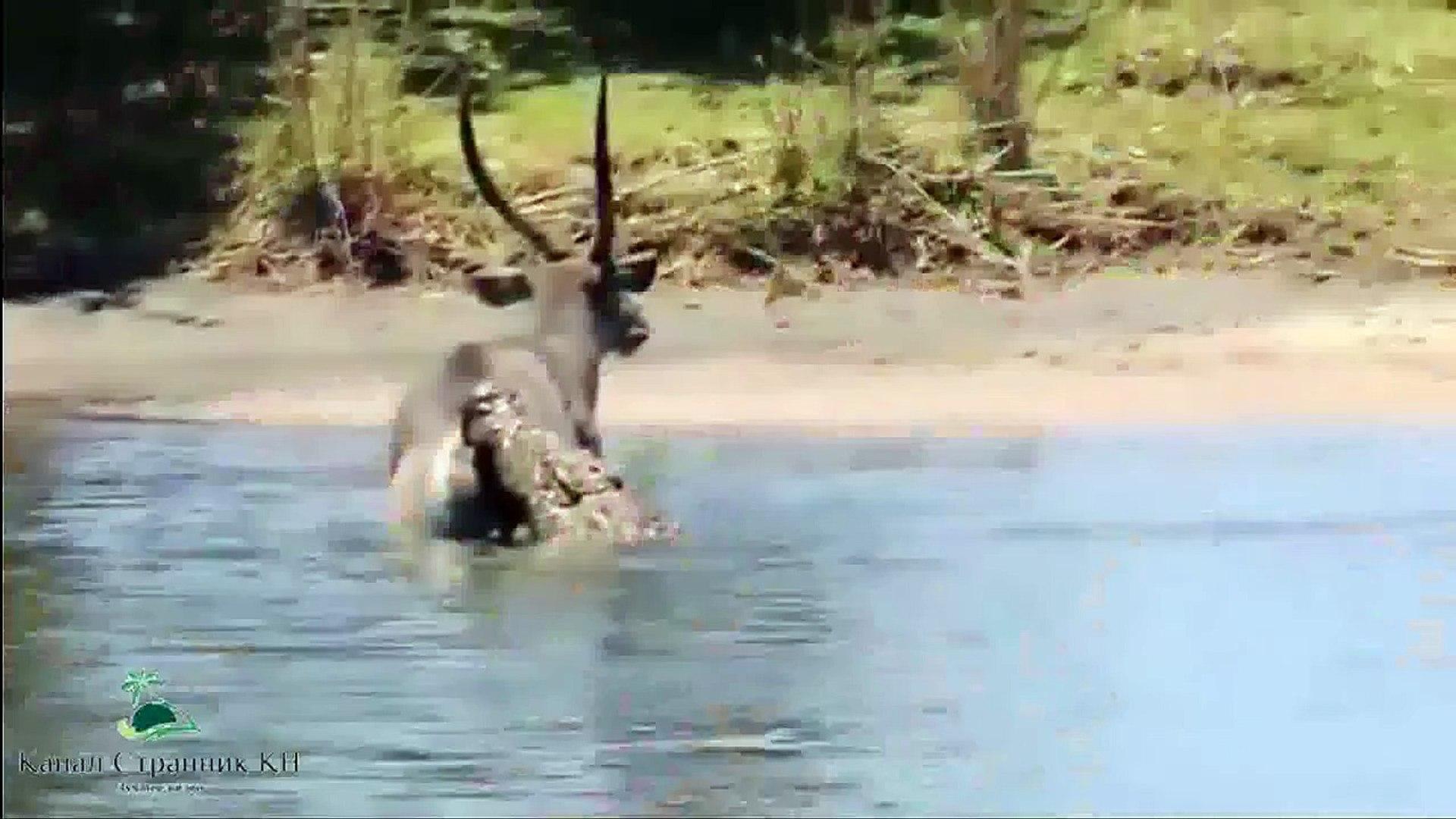 Зловещая охота крокодилов на зебр антилоп и газелей- Великая миграция через реку Мара