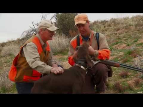 Hunting Quail in Arizona with Dogs