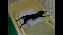 Banyo yapmak istemeyen köpeklerin komik halleri