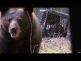 Bear Hunting in Saskatchewan Part 1
