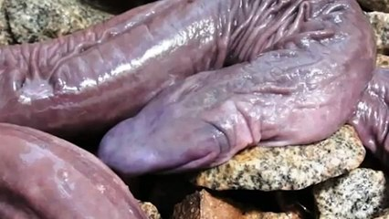 Top 10 Mysterious Deep Sea Creatures Caught On Camera