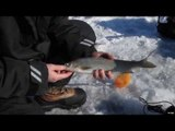 Icefishing For White Fish Of Green Bay