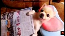 Funny Cute Animal Videos Youtube Compilation new 2016-cartoons compilation just for fun