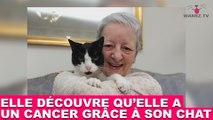 Elle découvre qu'elle a un cancer grâce à son chat ! L'incroyable maintenant dans la minute chat #130