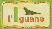 Multipédia des animaux. La lettre I - l'Iguane