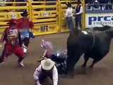 GIANT BULL did not give him a chance to live !!!