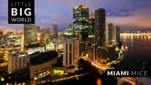 Miami Mice (Time lapse - Tilt Shift - 4k)