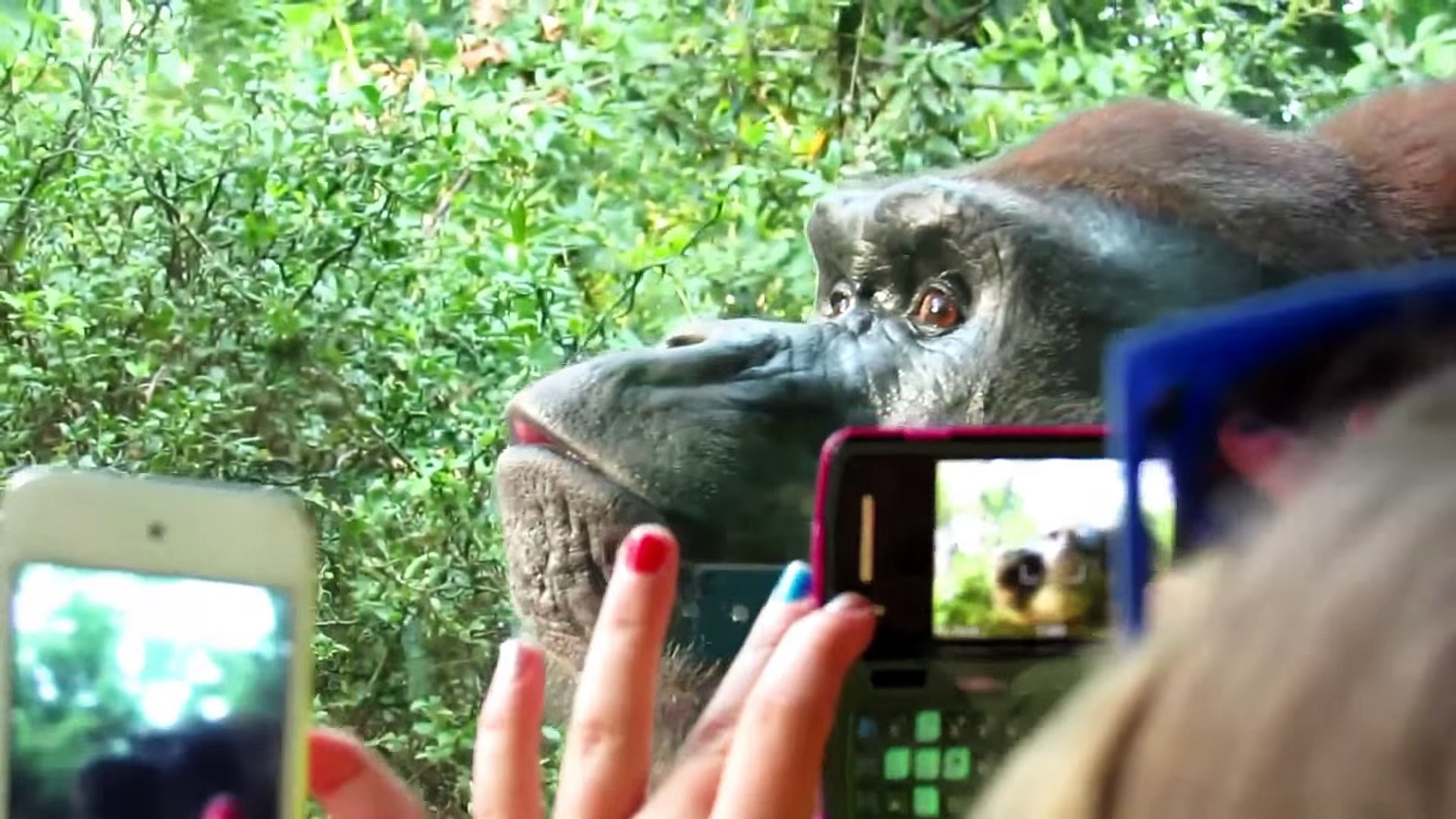 Kids and wild animals At The Zoo- Rainforest Animals and African animals