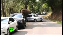 """""""Desilusão amorosa"""" faz elefante atacar carros em reserva ambiental; veja vídeo"""