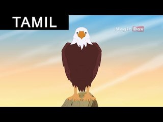 The Eagle And The Turtle - Aesop's Fables In Tamil - Animated/Cartoon Tales For Kids