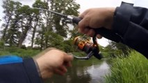 Huge 55 cm chub on spinning  Spinning fishing chub