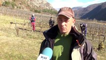 D!CI TV: l'entretien des vignes se fait toute l'année dans les Hautes-Alpes