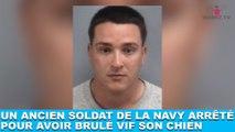 Un ancien soldat de la Navy arrêté pour avoir brulé vif son chien... Une terrible histoire dans la minute chien #132