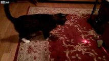OMG: Cats vs. Laser Pointer HD funny movies april fools pranks college funny april fools j