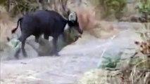 Animal Documentary Channel 2015 | Wild Life Documentary | Animal Documentary National Geog