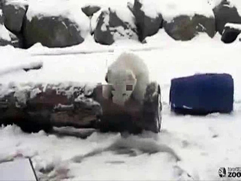 Toronto: Cet ourson polaire de 3 mois découvre la neige pour la première fois