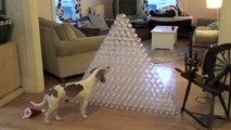 Best Dog Gift Ever -  Dog Receives 210 Bottles for Christmas- Cute Dog Maymo