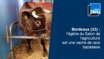 Interpellation musclée à Poitiers, reconstitution de l'accident de Rochefort, Esnest quitte la Dordogne : l'hebdo Aquitaine-Limousin-Poitou-Charentes