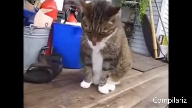 Dancing Cats Compilation dailymotion,  funy cats and dogs enjoing on misic 2016  best cats dancing videos must watch