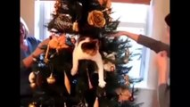 Funny Cats Dogs and Animals, Best Cat Dog Agility Compilation. Reality TV Pet Vines, Top F