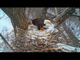DECORAH EAGLES  12/30/2015   9:03 AM  CST   MOM WITH FISH-DEER-DAD WITH STICK