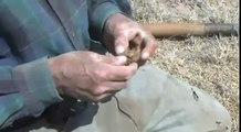 Hormigas tienen propiedades para curar enfermedades | Noticias de Hidalgo