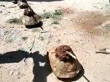ناشطون يسخرون من وعود إرسال الأسلحة الى سوريا
