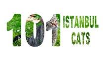 İstanbul kedileri...