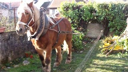 Arrachage-de-Tuyas-et-Lauriers-au-cheval