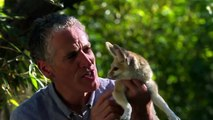 BBC Documentary 2015   BBC Super Cute Animals - Animals Planet, Discovery Channel