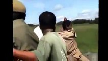 Tiger attacks elephant driver animals attacking people animal attack human compilation