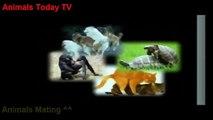► Animals Fight & Attack ➌ Crocodile Vs Wildebeest Video