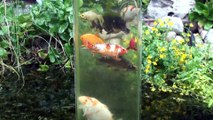 """Des poissons nagent """"en l'air"""" grâce à cet aquarium anti-gravité."""