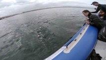 Un requin blanc mord un bateau pneumatique