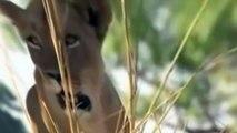 Leones vs Cocodrilo Miedo en el Río de la vida Salvaje de los Animales Documental de Discovery salvaje canal - 2016