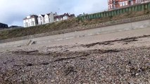 21 February 2016 Weather Share Video 21_02_2016 Down At Clacton On Sea Beach Essex With The Dog