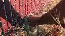 Ce chien voulait échapper à un piège. Mais regardez la suite après sa capitulation