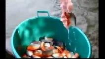 When animals attack | Extreme animal attacks on humans | Piranha Attacks