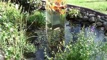 Il installe un aquarium dans un étang, la réaction des poissons est surprenante