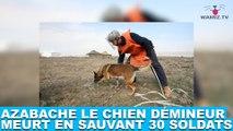 Azabache le chien démineur meurt en sauvant 30 soldats ! Plus d'infos dans la minute chien #140