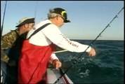 Kingfish Flourish In The Gulf